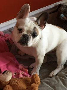 Ruby, Karen Grose French Bulldog Writing Companion